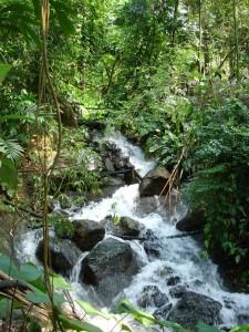 Eden Rain waterfall