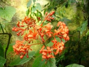 Eden rain flower 1
